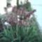 virágaim május 022