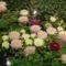 Tulln virágkiállítás, Ausztria