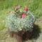 Virágos korhadt csutakom