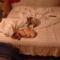 Caládi idill az ágyamon