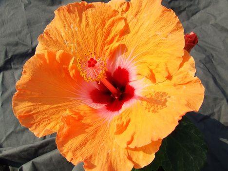 CasaGrande orange-Mandarin Wind