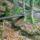 Jeli_arboretum_hetforras-001_1151019_9935_t