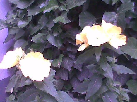 Kép005jpg Csoda sárgaság