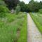 Szelestei Arborétum, Buxus sövény