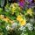 Juhász Bálintné Erzsike virágai