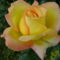 az első rózsa