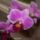 Edit virágai ünnepekre,alkalmakra