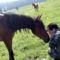 Egy nagyon barátságos és kiváncsi ló