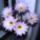 Kaktusz__ot_viraggal_05_1158376_3745_t