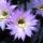 Kaktusz__ot_viraggal_06_1158370_2147_t