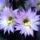 Kaktusz__ot_viraggal_08_1158378_4837_t