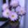 Kaktusz__ot_viraggal_10_1158362_6622_t