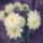splény mária virágai