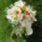 Narancs-fehér csepp alakú ballagási 1