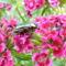 Aranyos rózsabogár 1