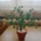 kis zöld fám
