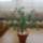 Kis_zold_fam_1105301_6151_t