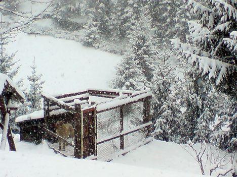Oszkár szomorúan nézi a hóesést