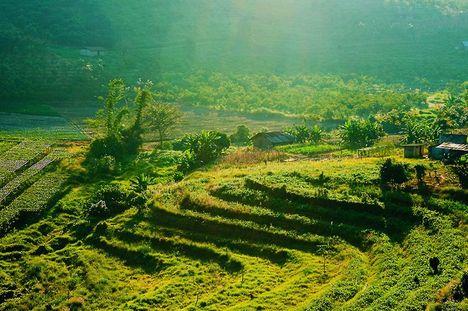 Thai földek