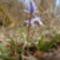 Zempléni kisvirág... ki tudja, hogy mi a neve?