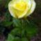 Egy szál rózsa mindenkinek jár 6