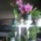 3 éves orchideám.