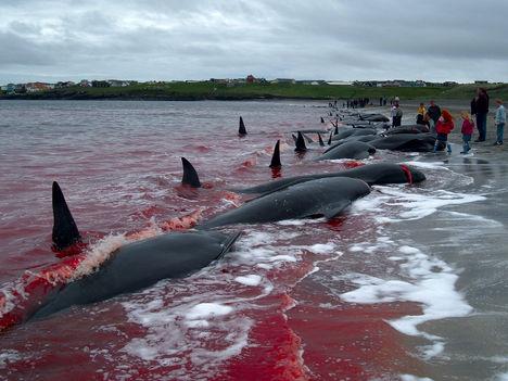 bálnavadászok