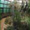 Kaktuszház