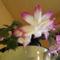 Karácsonyi kaktuszom