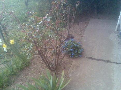 Tavaszi képek 10
