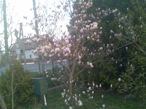 Tavaszi képek 5