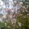 Tavaszi képek 8