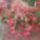 Torjayné Zsuzsanna  kertje és virágai