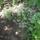 Boronyai Ilona növényei