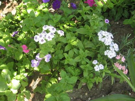 Most nyiló virágaim 12