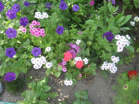 Most nyiló virágaim 13
