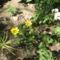 Most nyiló virágaim 16