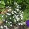 Most nyiló virágaim 19