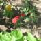 Most nyiló virágaim 1