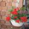 Most nyiló virágaim 21