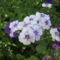Most nyiló virágaim 29