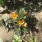 Most nyiló virágaim 2