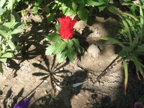 Most nyiló virágaim 33