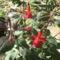 Most nyiló virágaim 37
