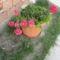 Most nyiló virágaim 40