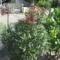 Most nyiló virágaim 47