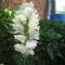 Most nyiló virágaim 57