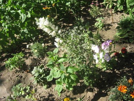 Most nyiló virágaim 6