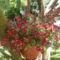 apró piros virág