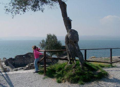 Olaszország, Garda-tó, olajfák 5